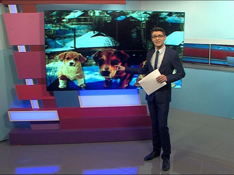 Топ самых жестоких обращений с животными в Ярославской области