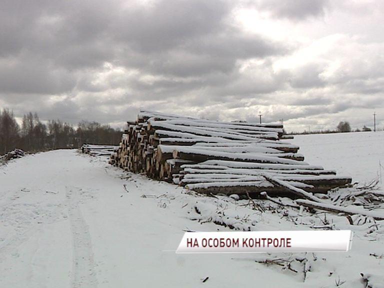 Количество незаконных вырубок в Ярославской области сократилось в четыре раза