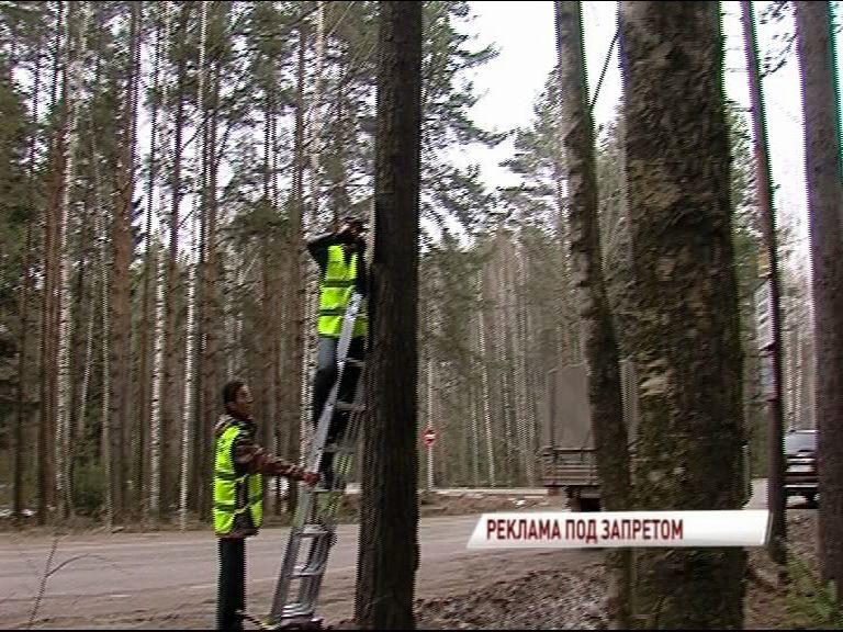 В ярославских лесах началась борьба с незаконными баннерами