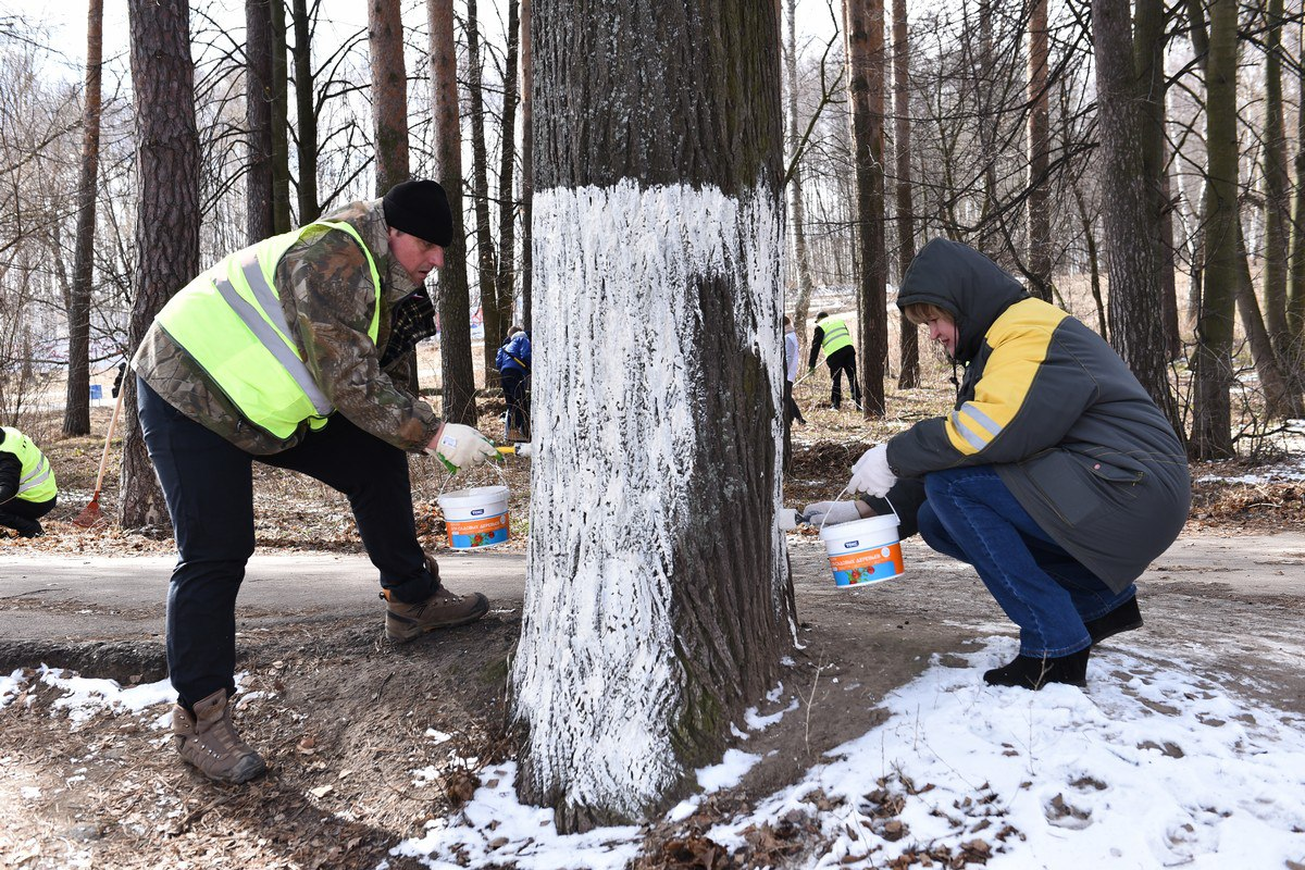 Волонтеры помогли благоустроить Павловскую рощу к летнему сезону