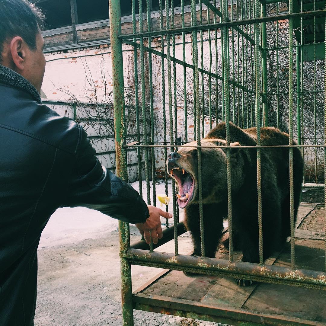 Прибывший в Ярославль кандидат в президенты РФ предложил переехать медведице Маше в зоопарк
