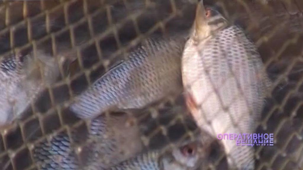 В Рыбинском районе задержали браконьера