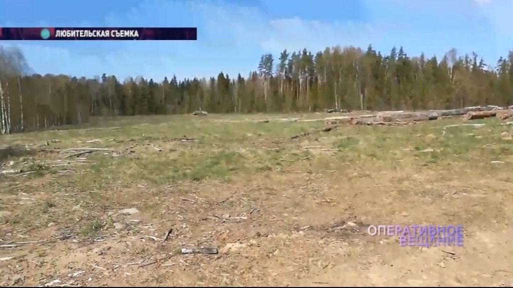 Спецтехника уничтожает лес