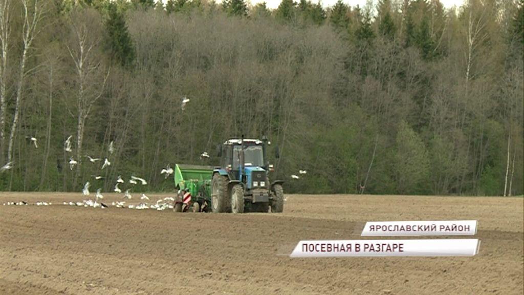 Большинство сельхозпредприятий уже вышли в поля