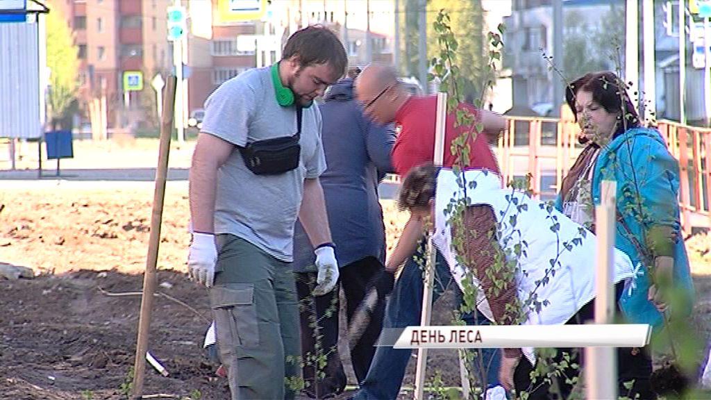 В Ярославле на улице Строителей появилась березовая аллея