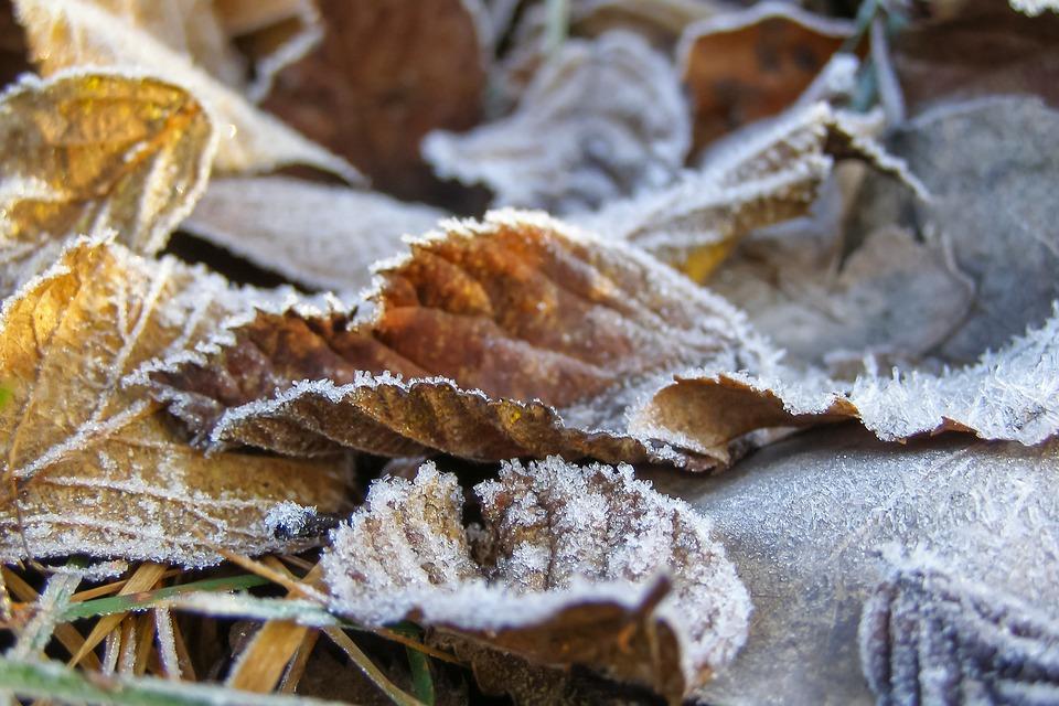 В Ярославской области введен «желтый» уровень опасности: ожидаются заморозки