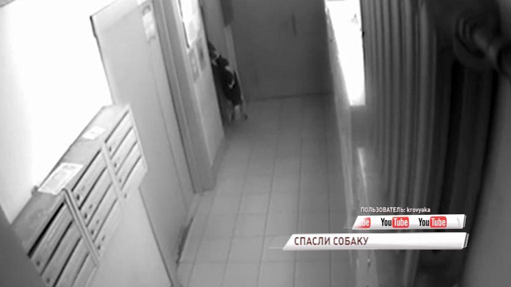 ВИДЕО: Подростки спасли собаку, которую чуть не убил лифт
