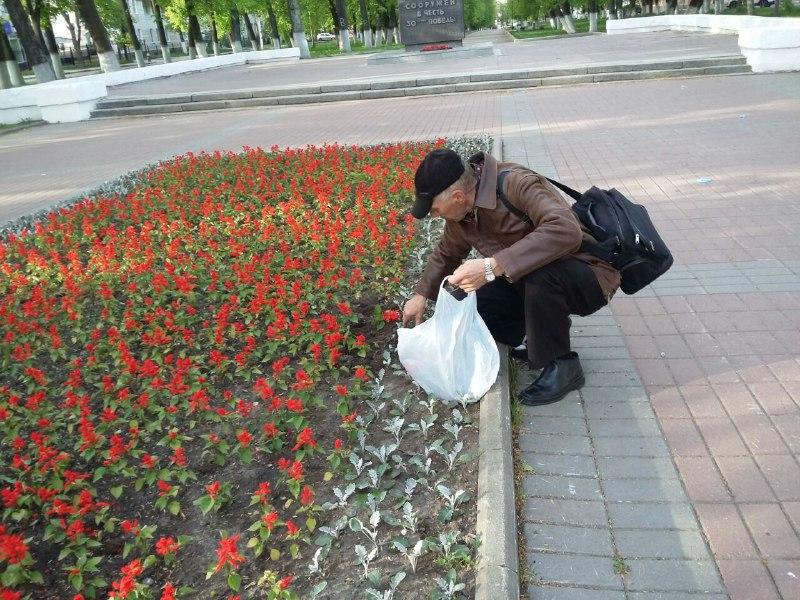 Ярославца поймали за кражей цветов с центральной клумбы