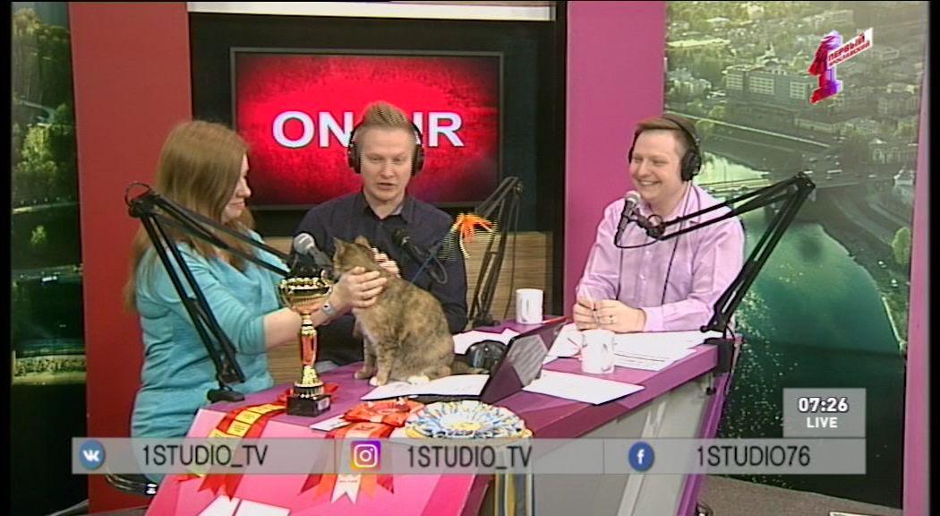 Ольга Кулибина о том, как воспитать из приютской кошки одного из «Лучших домашних котов России»