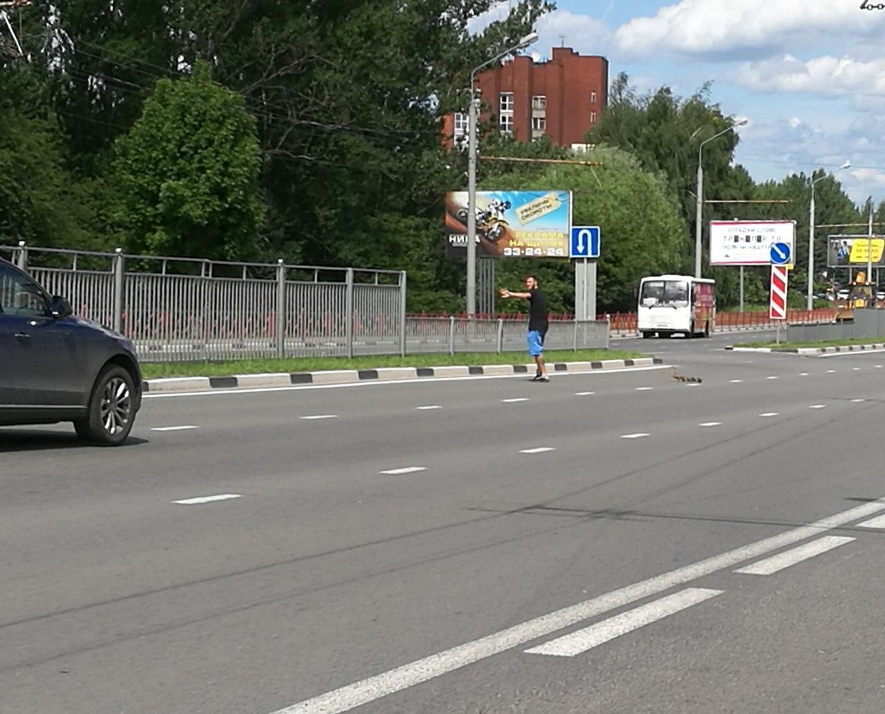 Ярославец остановил поток машин на Московском проспекте, чтобы помочь утиной семье перейти дорогу