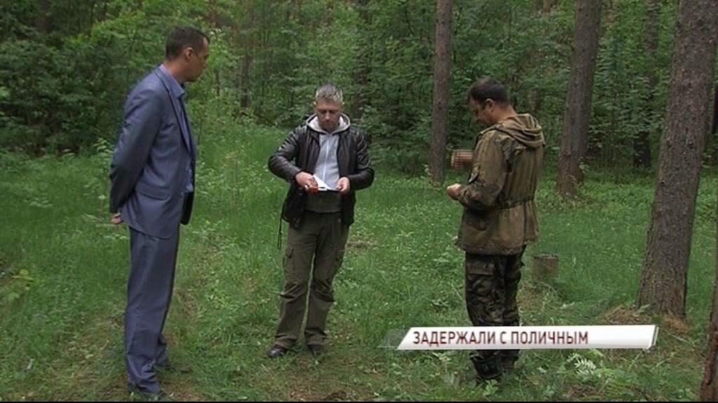 В Заволжском районе задержали черного лесоруба