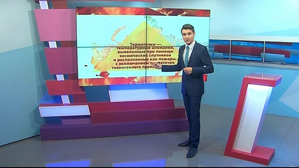 Эксперты Гринпис прибудут в Ярославль