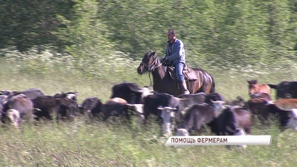 Ярославские фермеры получили правительственные гранты