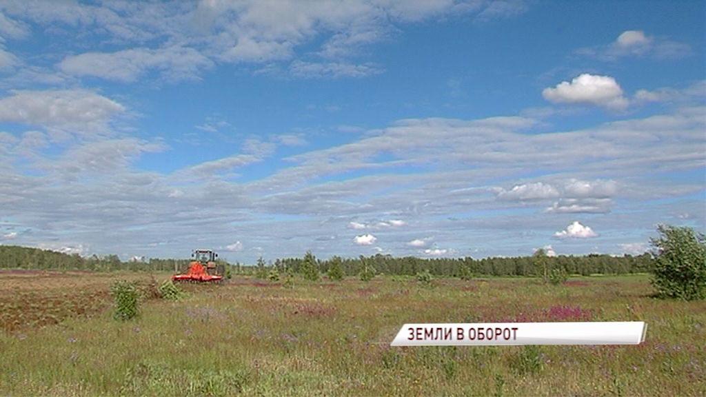 Пять тысяч гектаров земли засеяли культурами в Ростовском районе