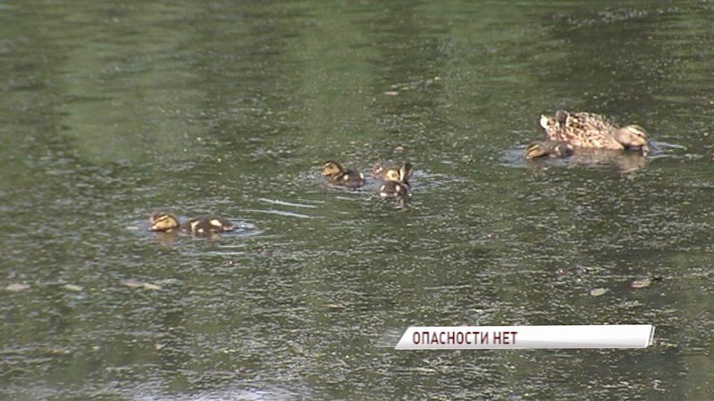 Загрязнения и опасных стоков в прудах парка Судостроителей не обнаружено