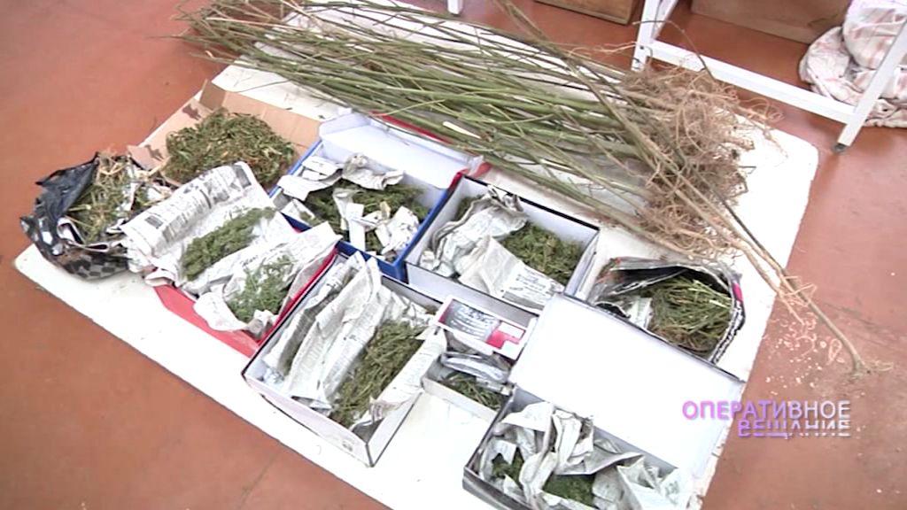 Житель Тутаева в своей квартире устроил наркоплантацию