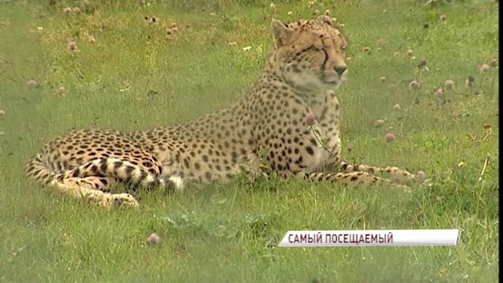 Ярославский зоопарк вошел в топ-10 самых посещаемых в России