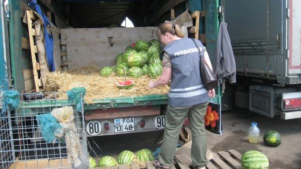 В Ярославской области пытались продать 20 тонн опасных арбузов