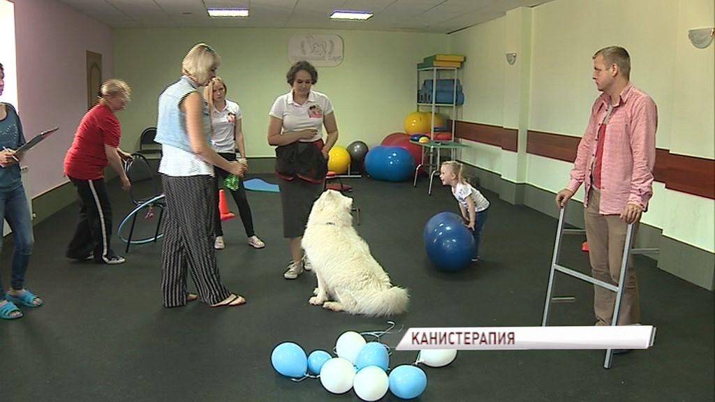 В Ярославской области прошла аттестация собак-терапевтов