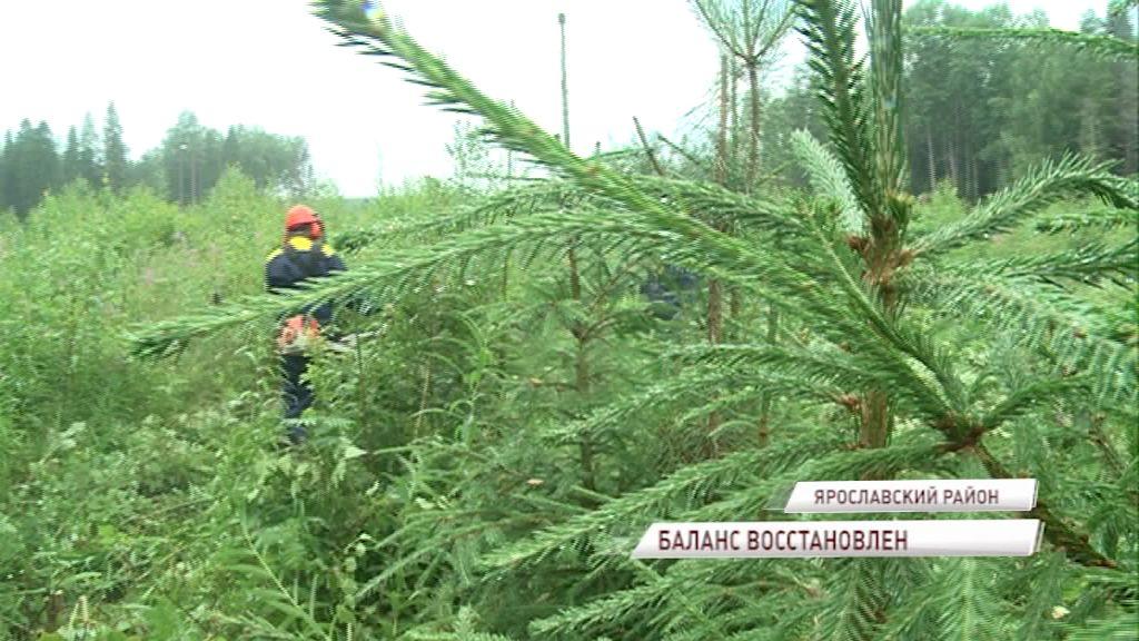 В регионе активно занимаются восстановлением лесов