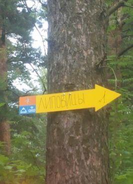 В лесах Ярославской области для потерявшихся грибников установят знаки
