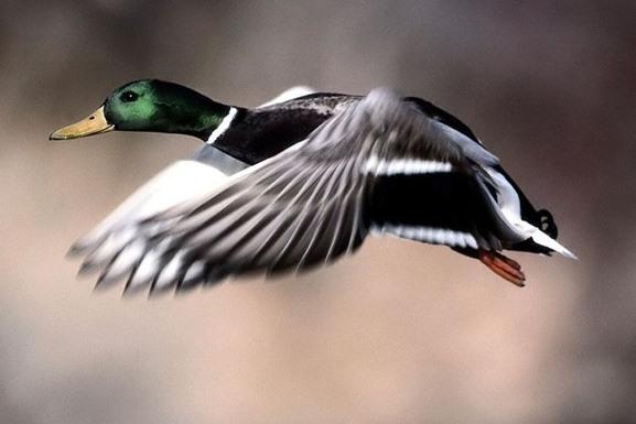 В Ярославской области в два раза снизилось количество правонарушений во время сезона охоты