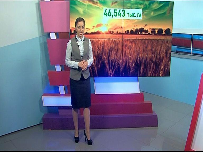 Ярославские аграрии подсчитали объемы урожая