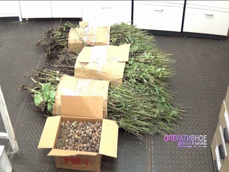 В Пошехонском районе у 41-летней женщины изъяли два килограмма маковой соломы
