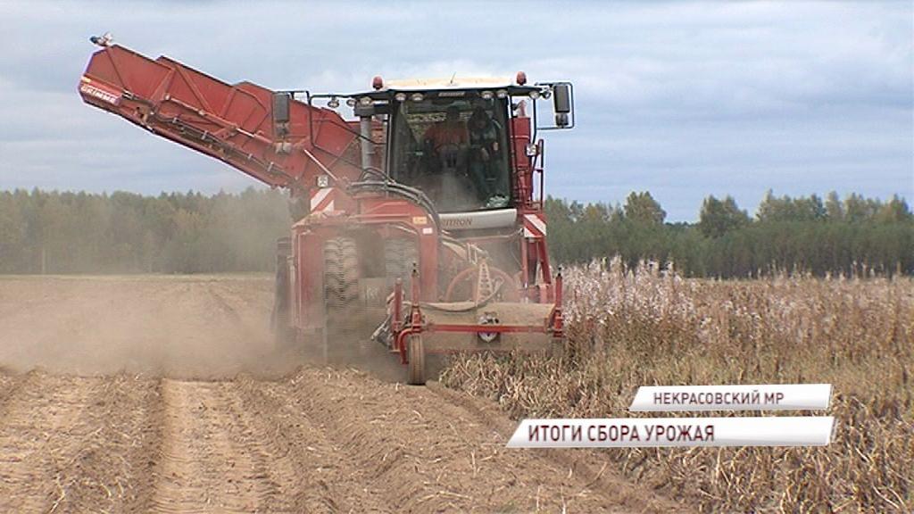 Сбор урожая в Ярославской области подходит к концу