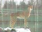 Жители ярославского зоопарка переехали в зимние квартиры