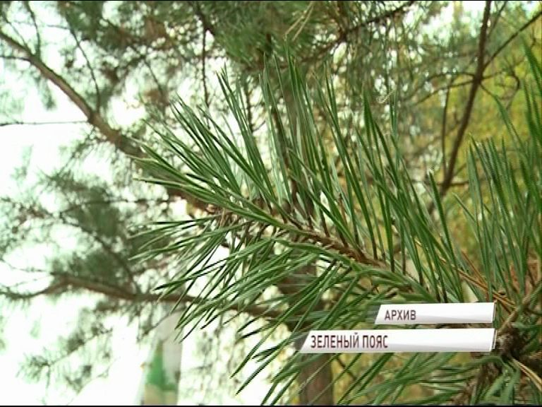 Вокруг Ярославля появится лесопарковый зеленый пояс