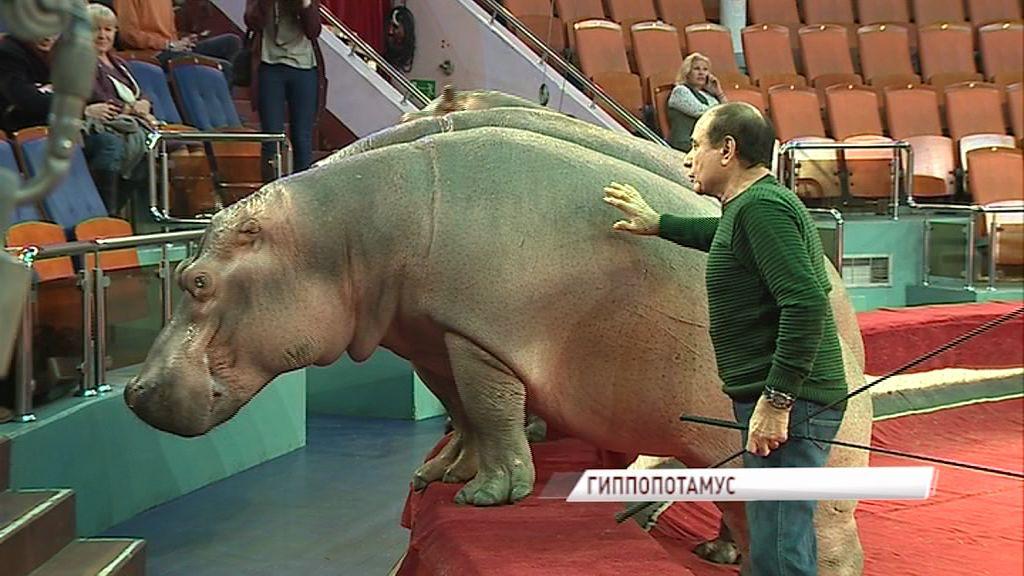 В новом цирковом шоу можно узнать: как изобразить голос бегемота, подружить травоядных и хищников и объединить цирк с балетом
