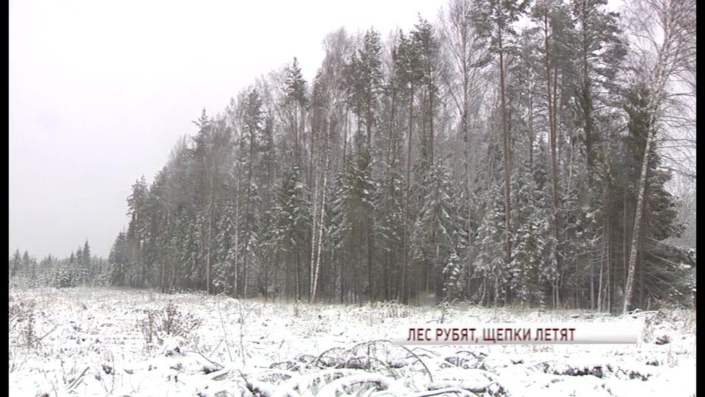 В Ярославской области продолжается борьба с лесорубами