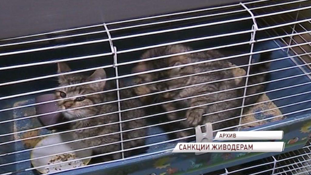 Живодеров ожидают штрафы до 300 тысяч рублей