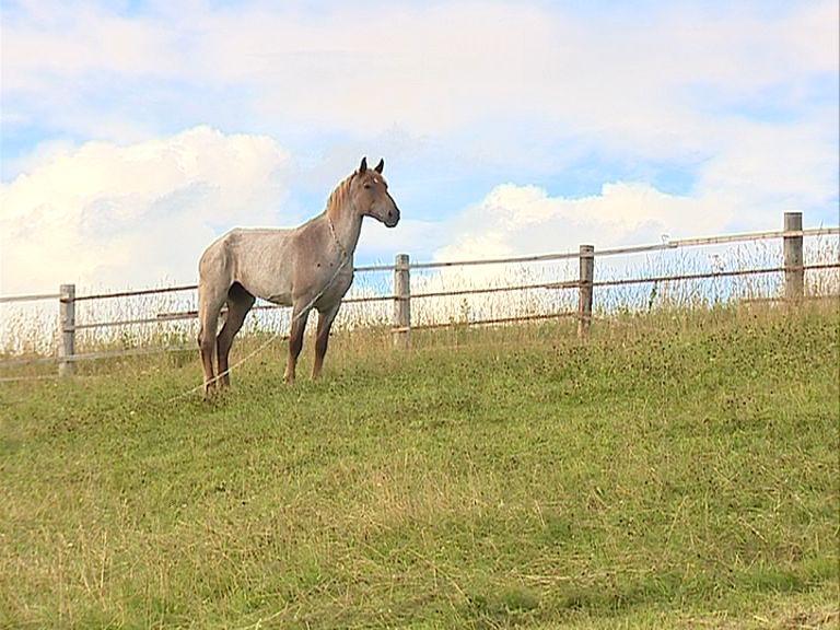 Под Переславлем бешенством заболела лошадь