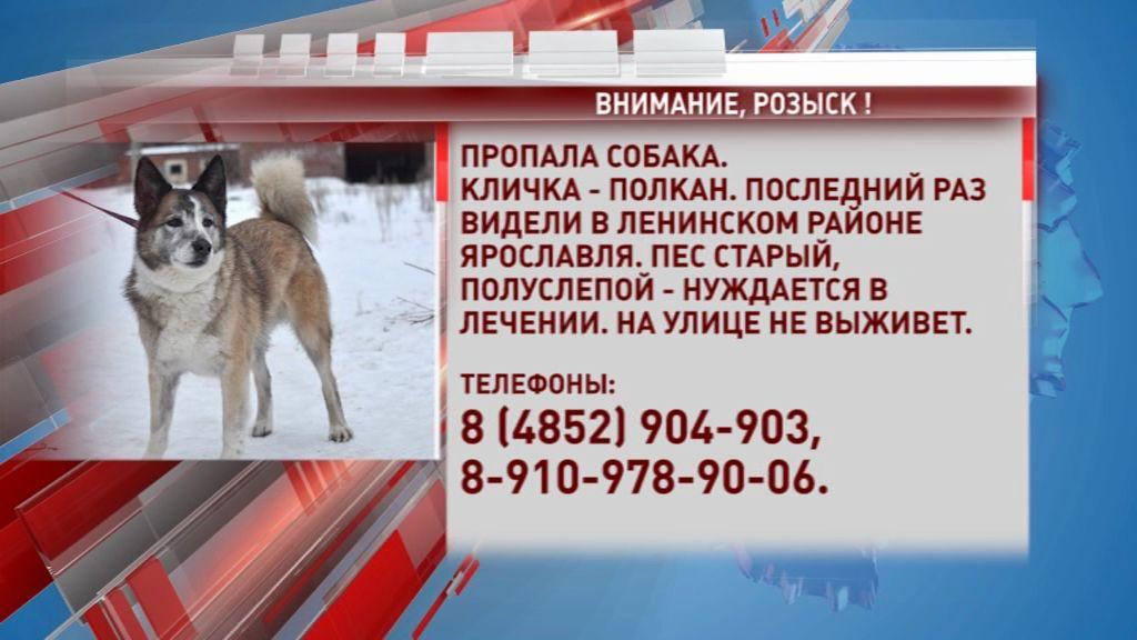 В Ленинском районе пропал пес Полкан