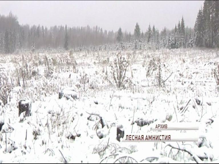 Некоторые участки, находящиеся в лесной зоне, будут легализованы