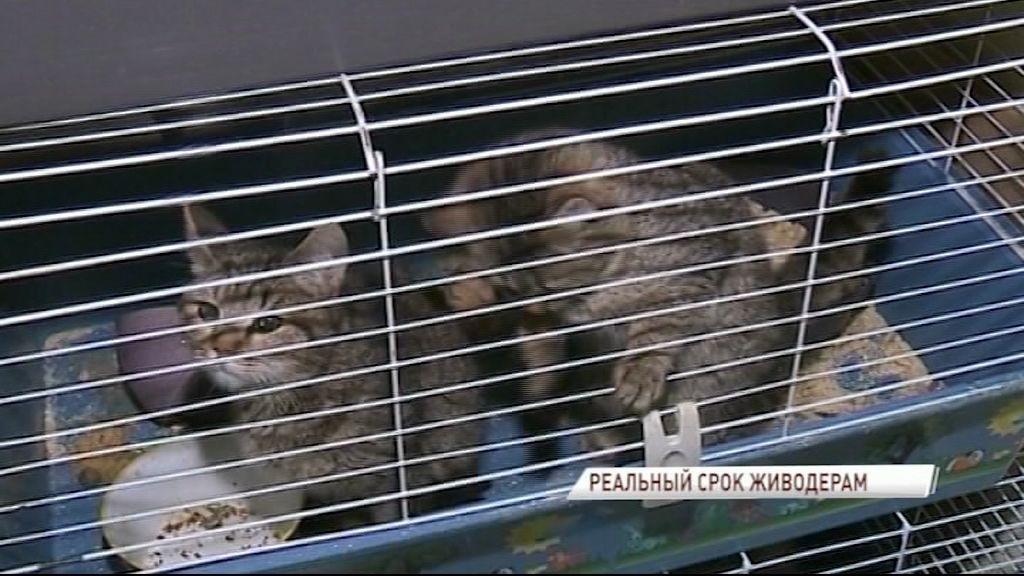 За издевательства над животными будут отправлять в тюрьму