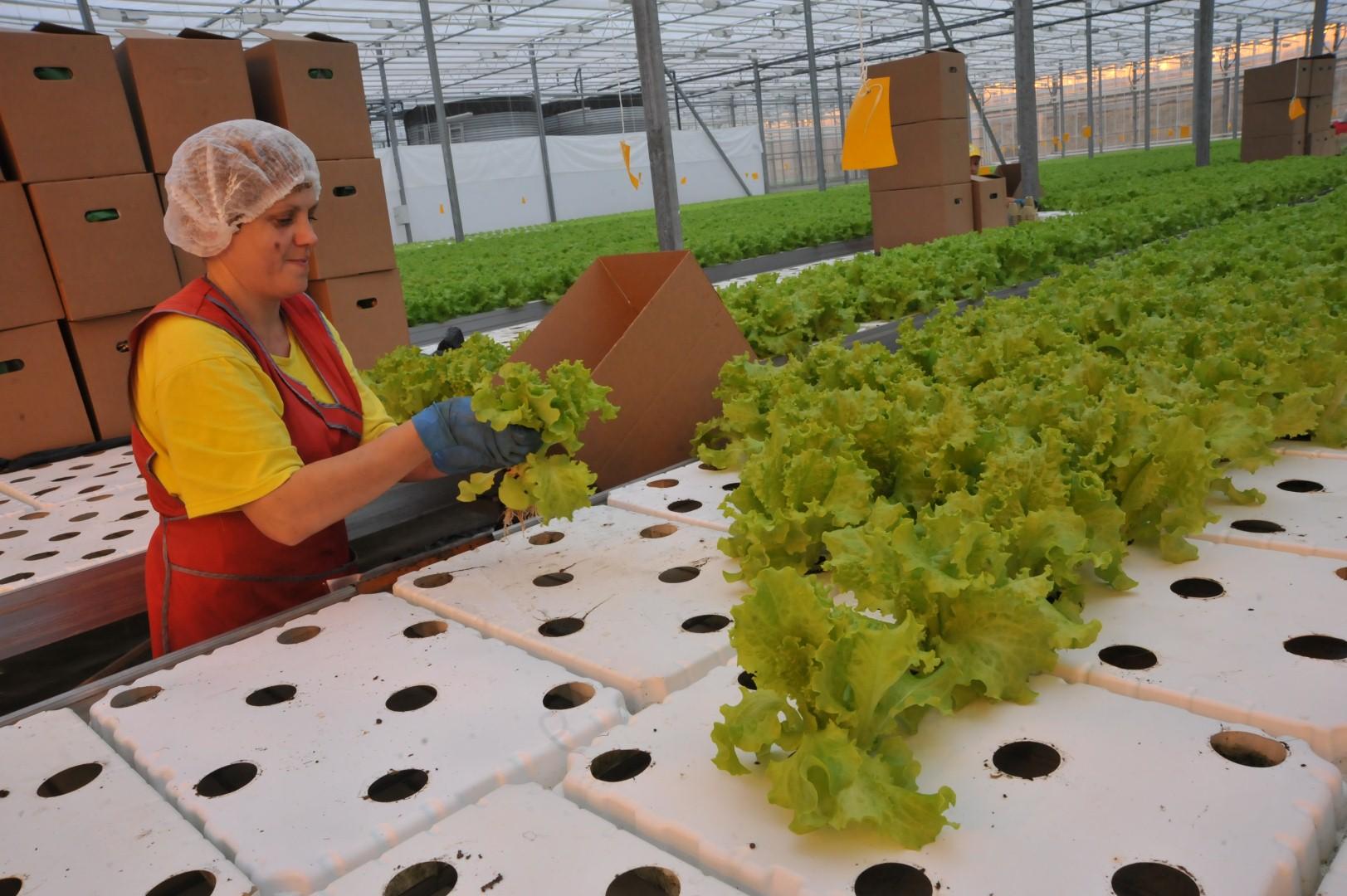Проект создания первого агропромышленного парка в Ярославской области одобрен на федеральном уровне
