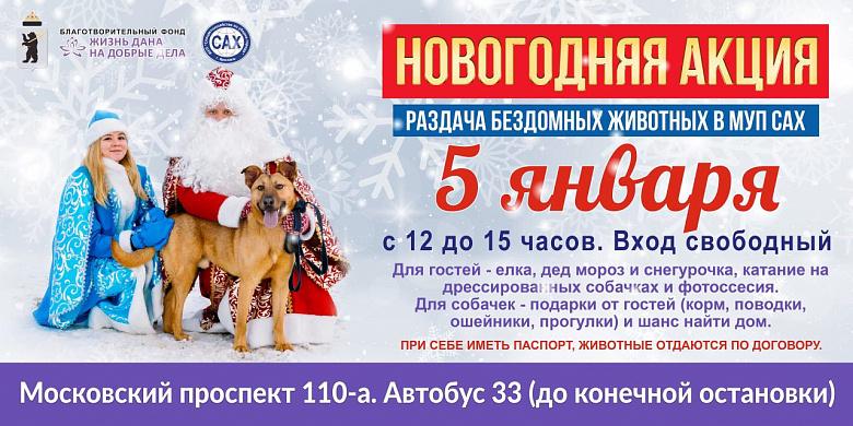 В Ярославле состоится новогодняя акция по раздаче бездомных животных