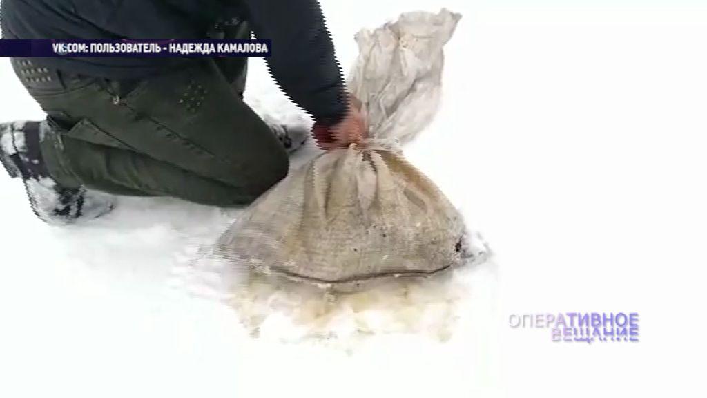 Под Рыбинском неизвестные в лесу оставили мешок с щенятами