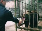 В Ярославле медведица Маша впала в зимнюю спячку