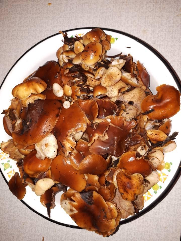Из-за аномально теплой погоды в ярославских лесах пошли грибы
