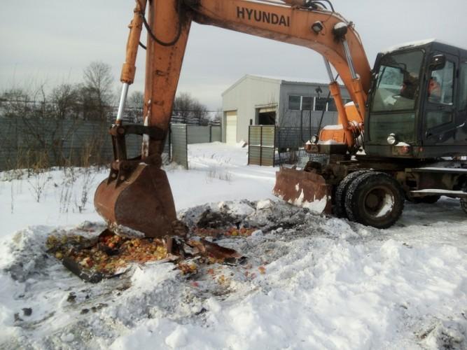 В Ярославле уничтожили 134 килограмма санкционных яблок