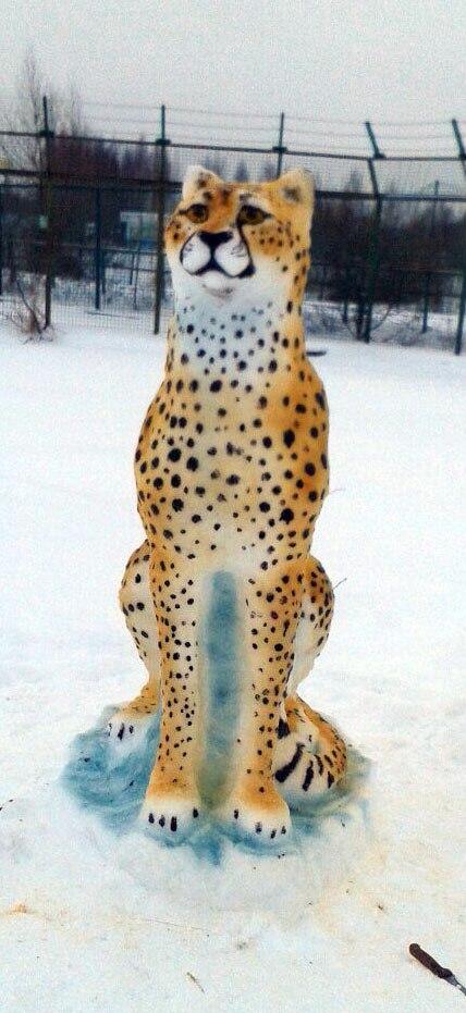 В Ярославском зоопарке гепарду подселили снежного друга