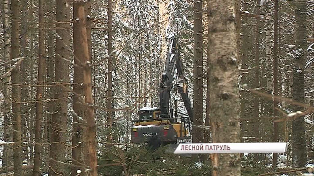 Лесные ревизоры отправились в рейд в Борисоглебский район: какие нарушения выявлены