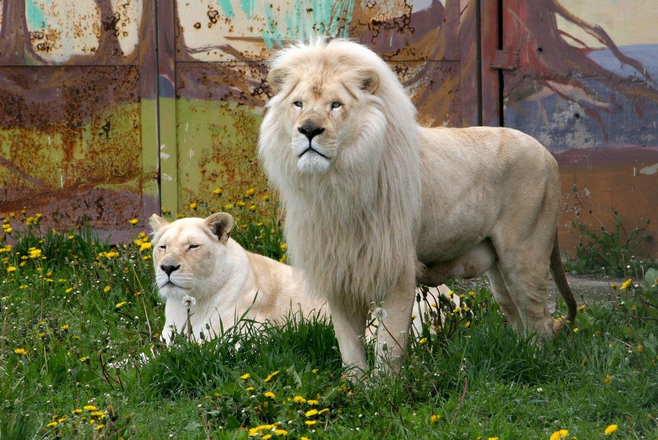 В ярославском зоопарке выберут лучшую пару животных
