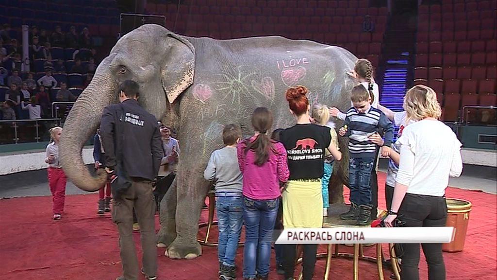 В ярославском цирке дети разрисовали мелками слониху