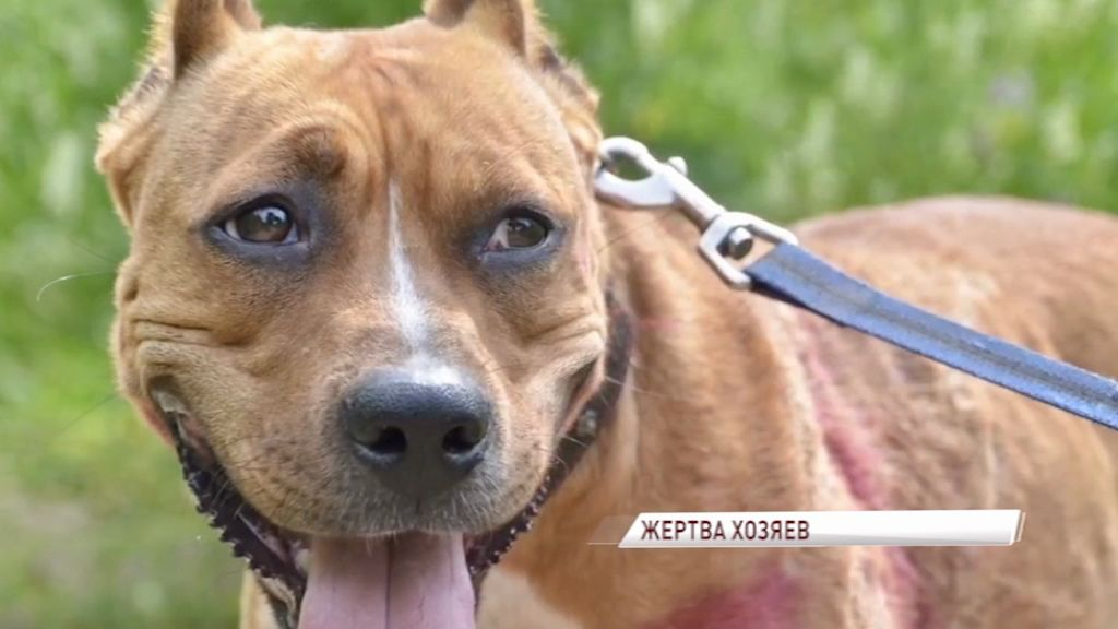 В Ярославской области домашняя собака подхватила бешенство