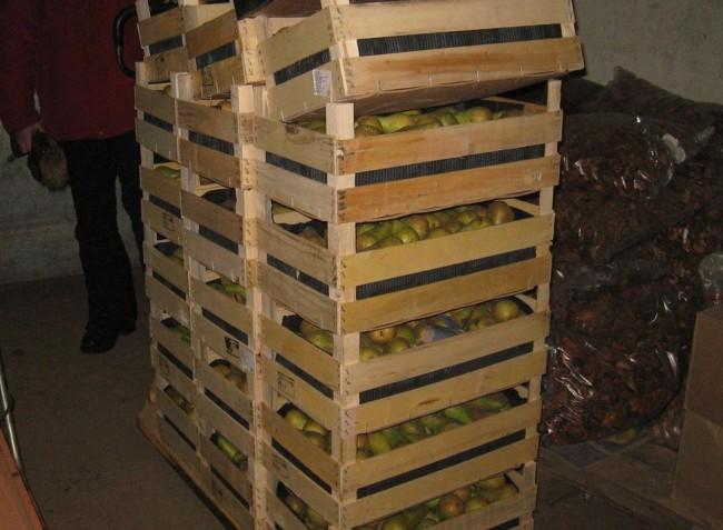 В Скоково раздавили больше двухсот килограммов свежих груш